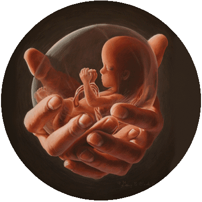 Image of Hands Holding Unborn Baby